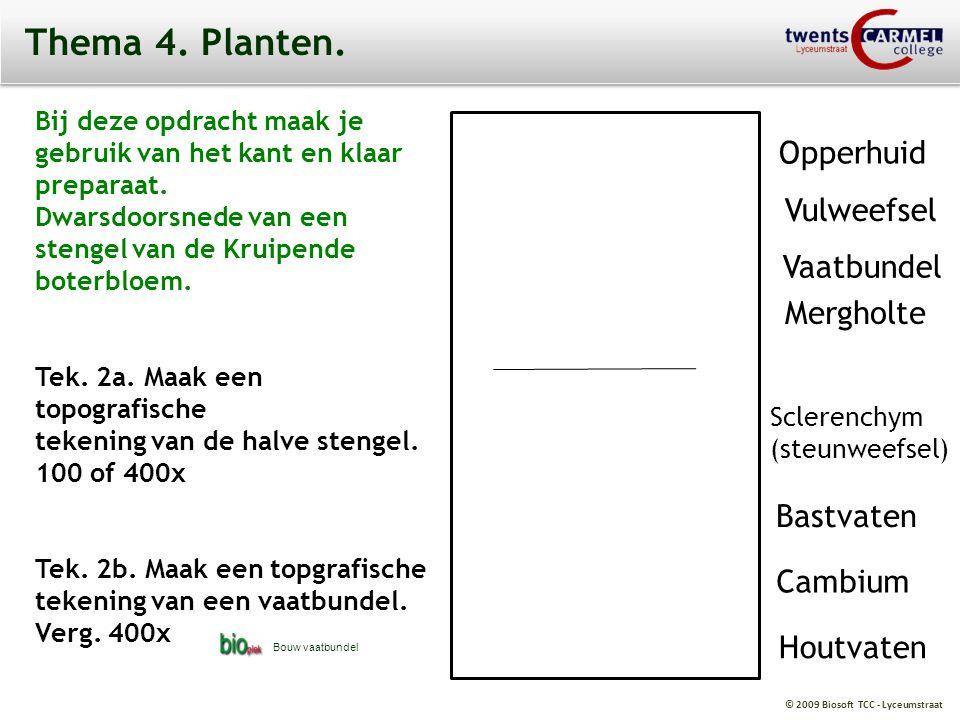 © 2009 Biosoft TCC - Lyceumstraat Thema 4. Planten. Bij deze opdracht maak je gebruik van het kant en klaar preparaat. Dwarsdoorsnede van een stengel