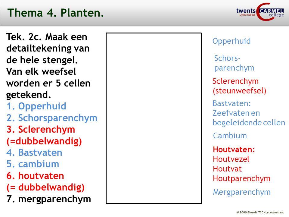 © 2009 Biosoft TCC - Lyceumstraat Thema 4. Planten. Tek. 2c. Maak een detailtekening van de hele stengel. Van elk weefsel worden er 5 cellen getekend.