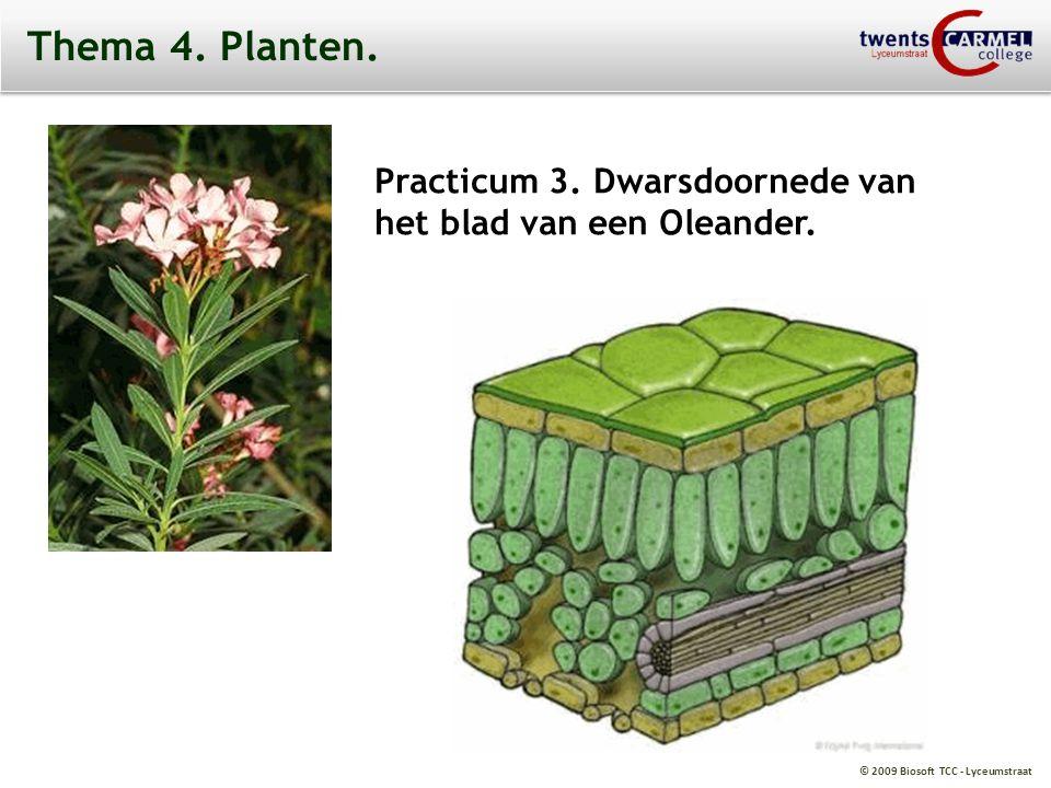 © 2009 Biosoft TCC - Lyceumstraat Thema 4. Planten. Practicum 3. Dwarsdoornede van het blad van een Oleander.