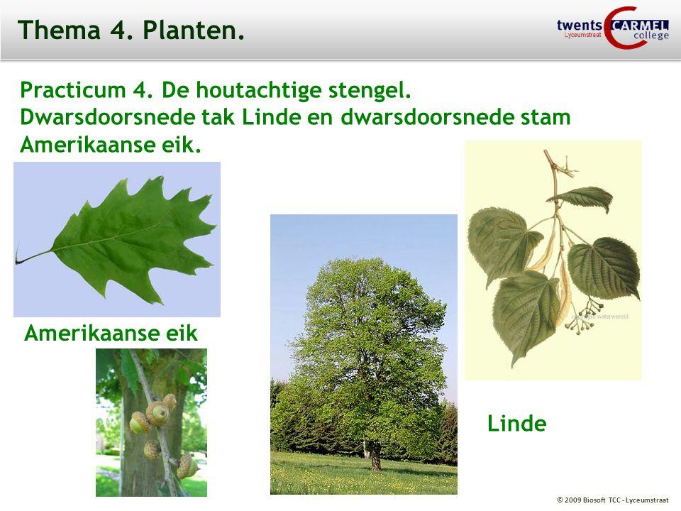 © 2009 Biosoft TCC - Lyceumstraat Thema 4.Planten.