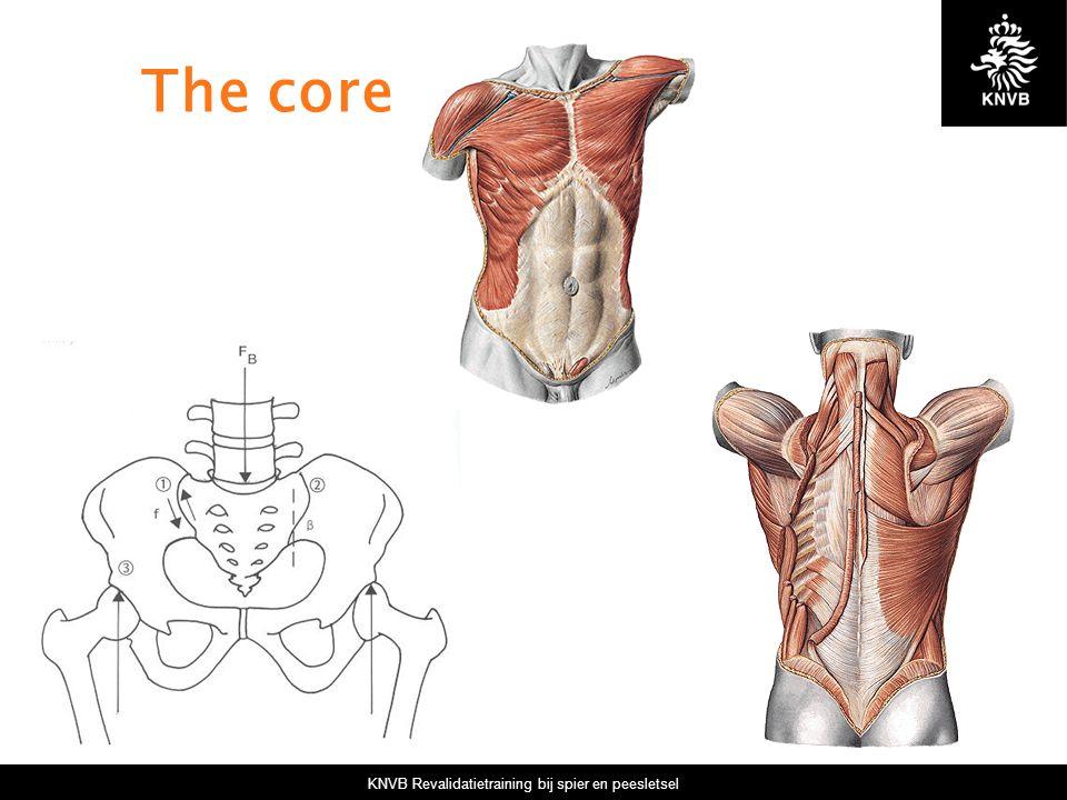 KNVB Revalidatietraining bij spier en peesletsel The core