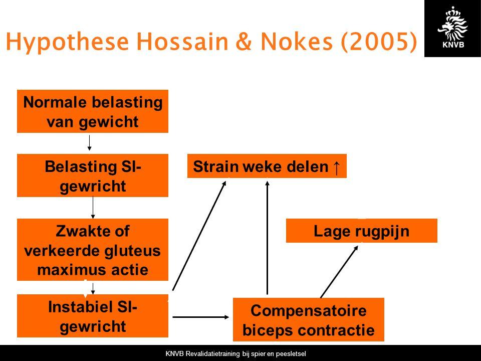 KNVB Revalidatietraining bij spier en peesletsel Hypothese Hossain & Nokes (2005) Normale belasting van gewicht Belasting SI- gewricht Zwakte of verke