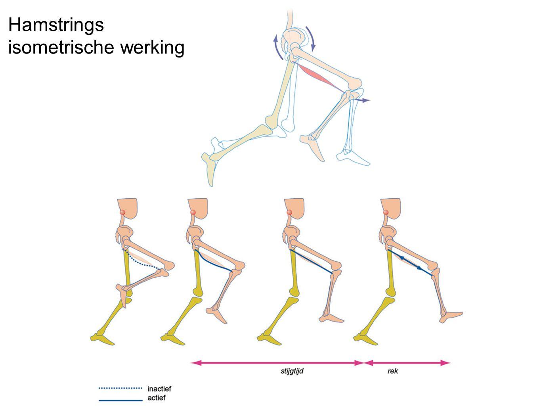 Hamstrings isometrische werking