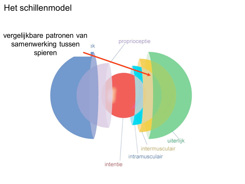 Het schillenmodel vergelijkbare patronen van samenwerking tussen spieren
