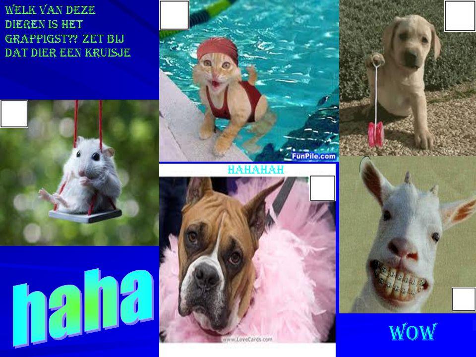 Welk van deze dieren is het grappigst Zet bij dat dier een kruisje hahahah wow
