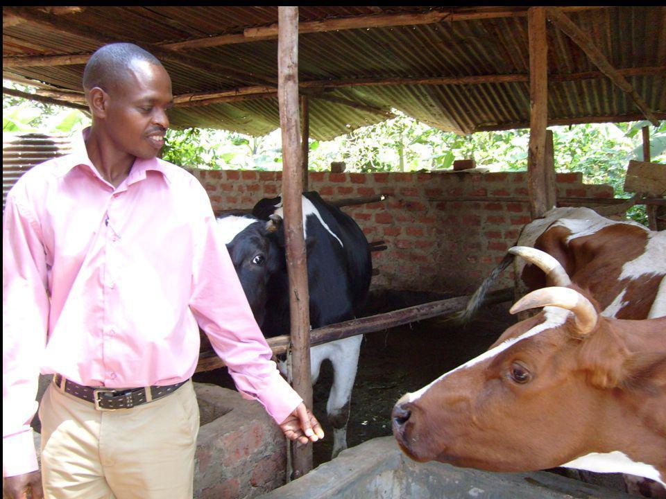 Landbouw- en koeienproject Het schenken van een kalf aan een ander behoorde altijd al tot de tradities van Rwanda Hiermee versterkt men een band die vergelijkbaar is met een familieband Binnen een gemeenschap waar overlevenden en ex- gevangenen weer samen leven probeert dit project deze banden te versterken Verzoeningsprojecten People for People Rwanda