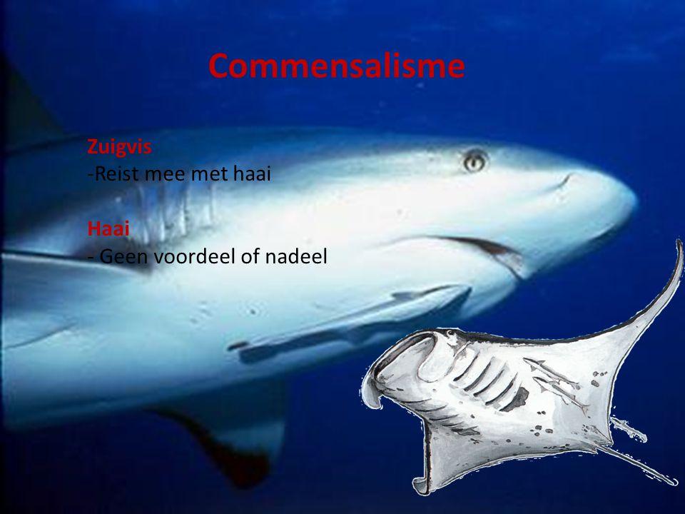Commensalisme Zuigvis -Reist mee met haai Haai - Geen voordeel of nadeel