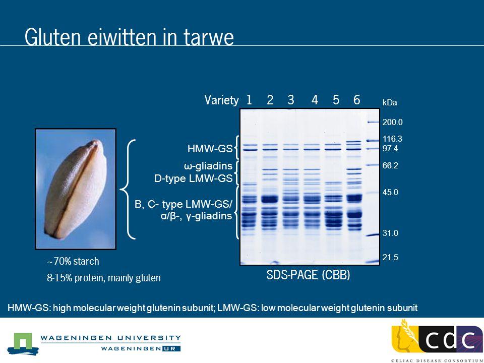 B, C- type LMW-GS/ α/β-, γ-gliadins HMW-GS ω-gliadins D-type LMW-GS Variety 1 2 3 4 5 6 SDS-PAGE (CBB) kDa 200.0 116.3 97.4 66.2 45.0 31.0 21.5 Gluten eiwitten in tarwe HMW-GS: high molecular weight glutenin subunit; LMW-GS: low molecular weight glutenin subunit ~70% starch 8-15% protein, mainly gluten