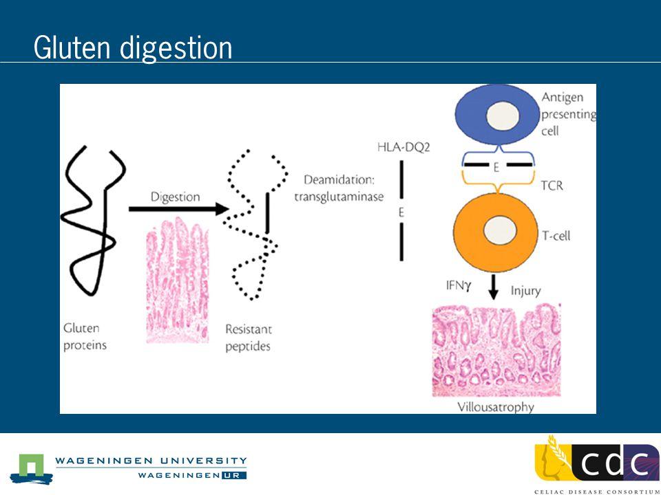 Gluten digestion