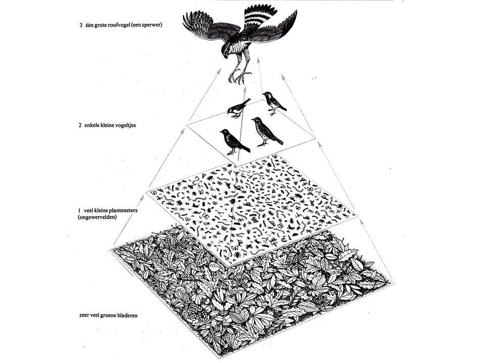 7.Een voedselweb ontstaat als men meerdere voedselketens, die gemeenschappelijke elementen bevatten, in een schema bij elkaar brengt ?