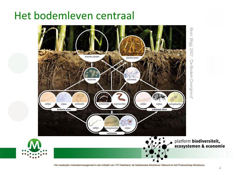 Het bodemleven centraal 4 Bron: Blgg, 2007. 'De Bodem Doorgrond'