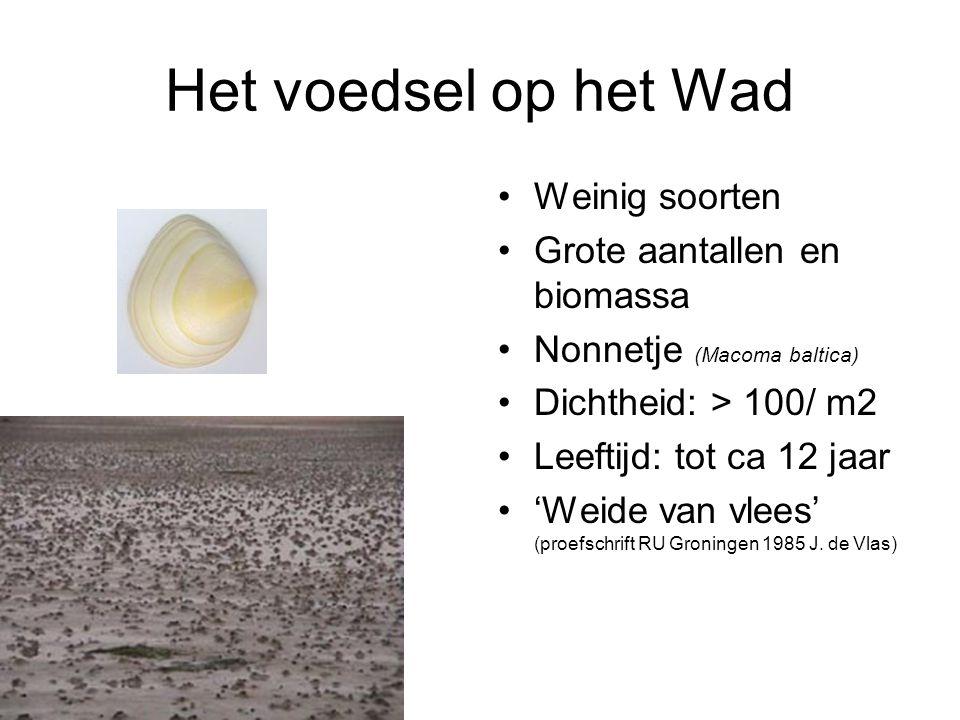 Het voedsel op het Wad Weinig soorten Grote aantallen en biomassa Nonnetje (Macoma baltica) Dichtheid: > 100/ m2 Leeftijd: tot ca 12 jaar 'Weide van vlees' (proefschrift RU Groningen 1985 J.