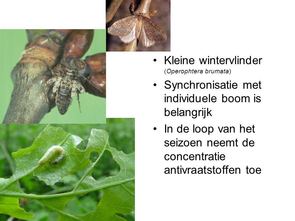 Kleine wintervlinder (Operophtera brumata) Synchronisatie met individuele boom is belangrijk In de loop van het seizoen neemt de concentratie antivraatstoffen toe