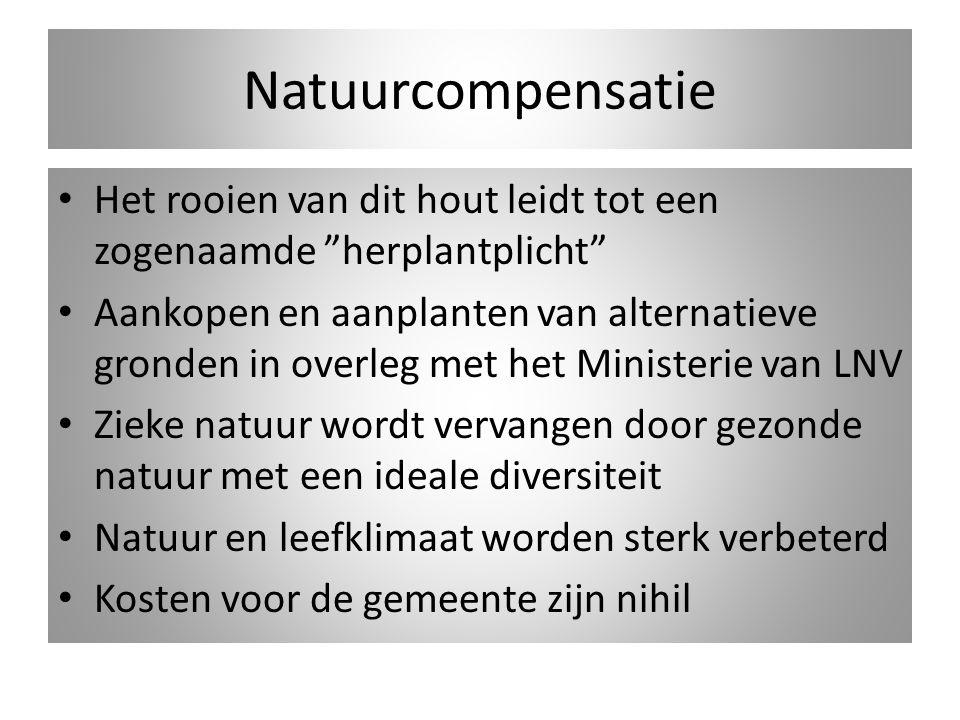 Het huidige oude Budel-Dorplein Voornemen tot beschermd dorpsgezicht is een goede zaak.