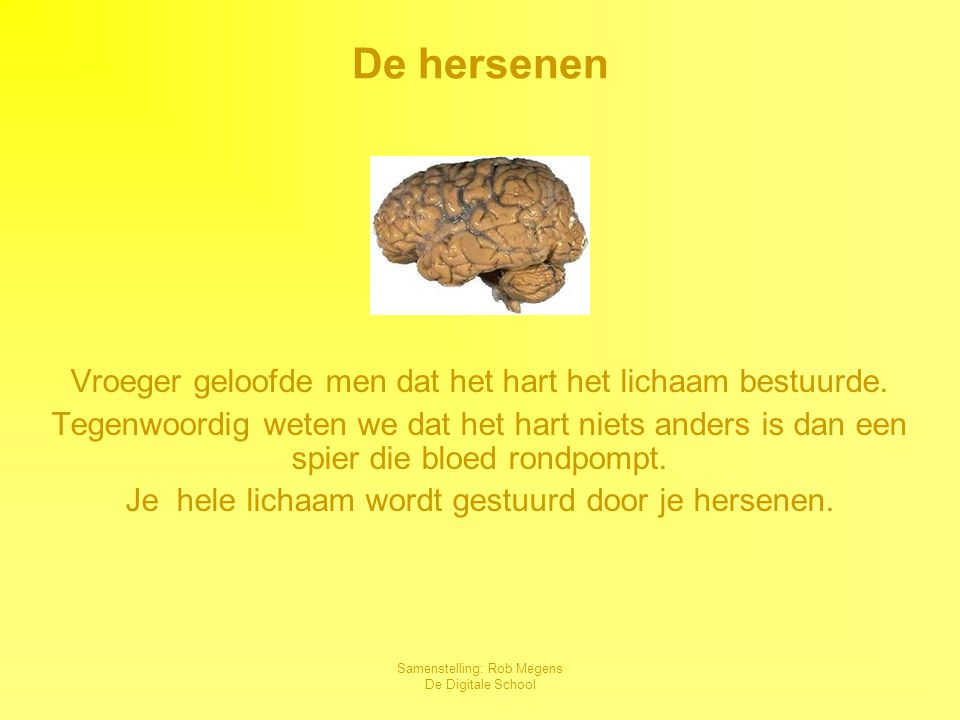 Samenstelling: Rob Megens De Digitale School Grote hersenen, kleine hersenen en hersenstam Menselijke hersenen wegen + 1,36 kilogram De kleine hersenen regelen het evenwicht en de lichaamshouding.