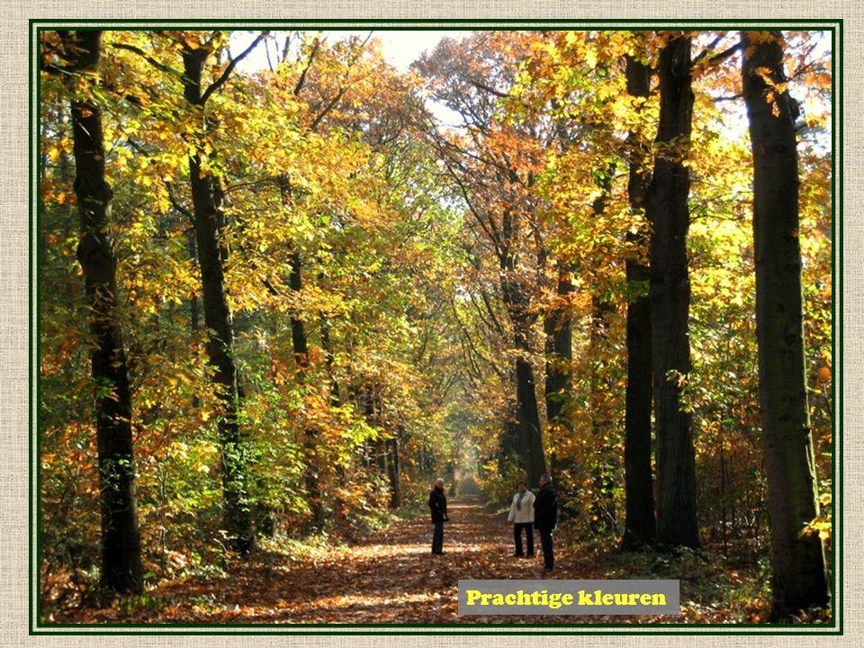 Herfst in het Mastbos ….