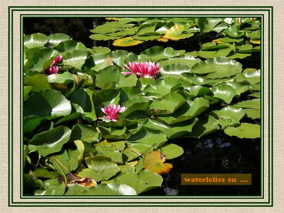 waterlelies en ….