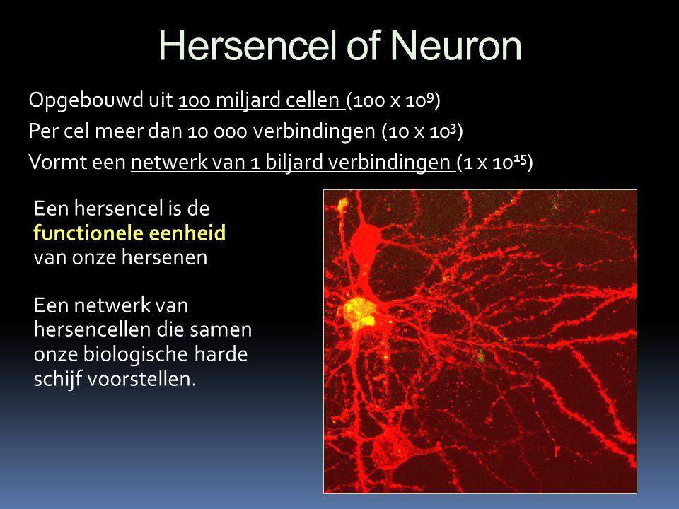 Hersencel of Neuron Opgebouwd uit 100 miljard cellen (100 x 10 9 ) Per cel meer dan 10 000 verbindingen (10 x 10 3 ) Vormt een netwerk van 1 biljard v