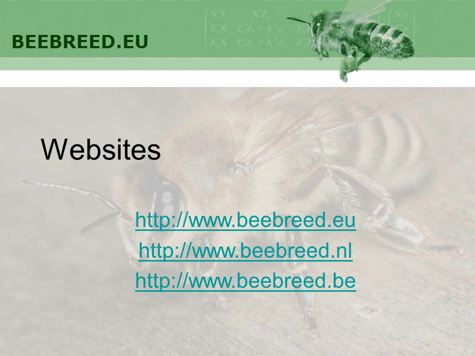 Websites http://www.beebreed.eu http://www.beebreed.nl http://www.beebreed.be