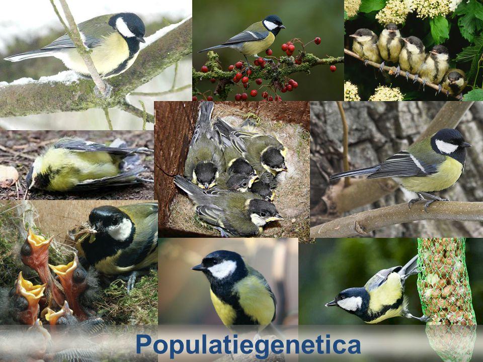 Populatiegenetica Bij willekeurige paringen ontstaan dan de volgende bevruchtingen: zaadcellen eicellen A 0,8 Aa 0,16 aa 0,04 AA 0,64 a 0,2