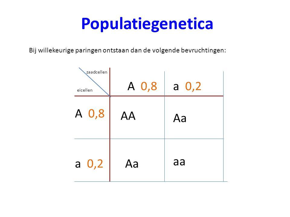 Populatiegenetica Bij willekeurige paringen ontstaan dan de volgende bevruchtingen: zaadcellen eicellen A 0,8 Aa aa AA a 0,2