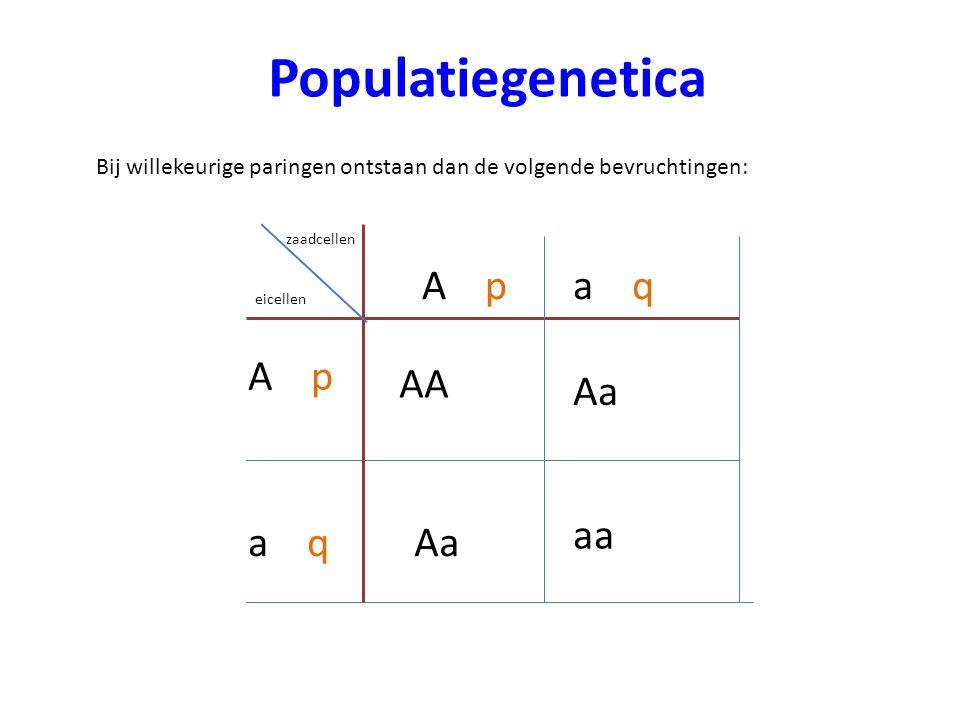 Populatiegenetica Bij willekeurige paringen ontstaan dan de volgende bevruchtingen: zaadcellen eicellen A p Aa aa AA a q
