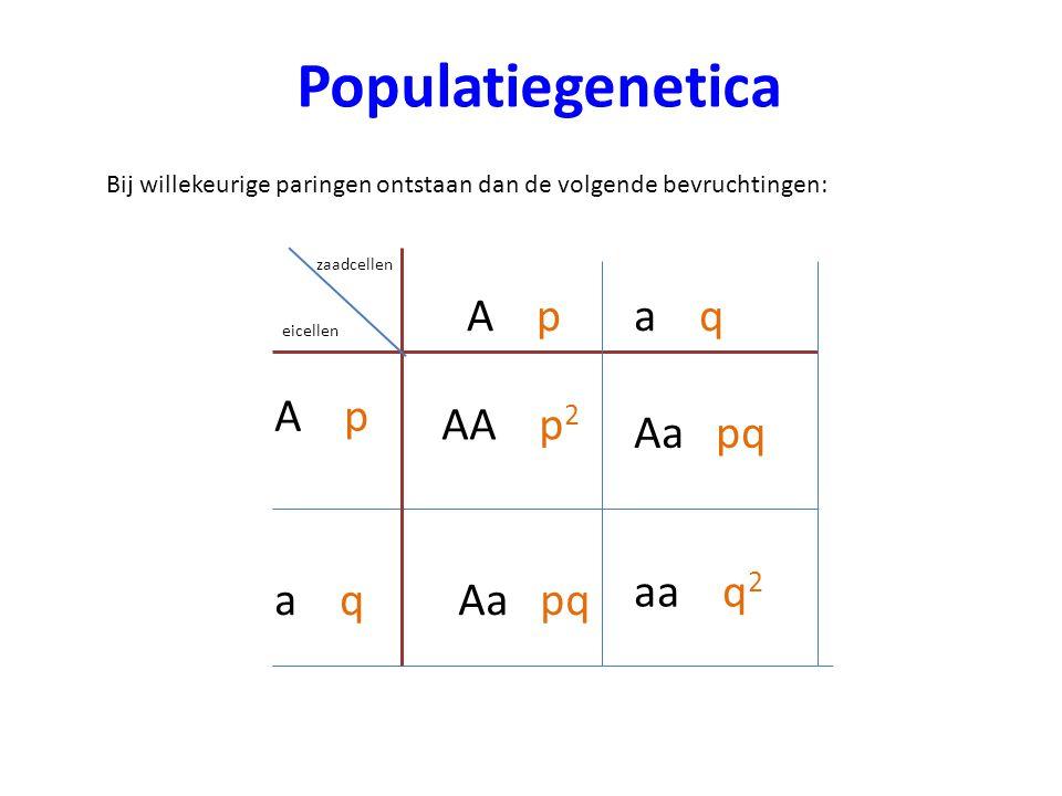Populatiegenetica Bij willekeurige paringen ontstaan dan de volgende bevruchtingen: zaadcellen eicellen A p Aa pq aa q 2 AA p 2 a q