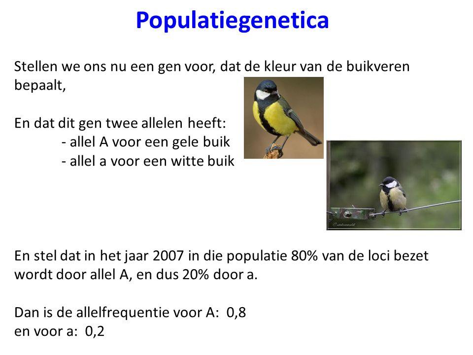 Populatiegenetica Stellen we ons nu een gen voor, dat de kleur van de buikveren bepaalt, En dat dit gen twee allelen heeft: - allel A voor een gele bu