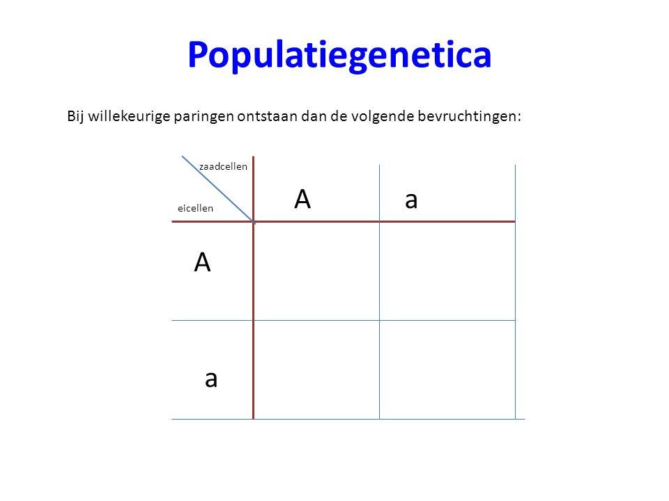 Populatiegenetica Bij willekeurige paringen ontstaan dan de volgende bevruchtingen: zaadcellen eicellen A Aa Aa aa AA a