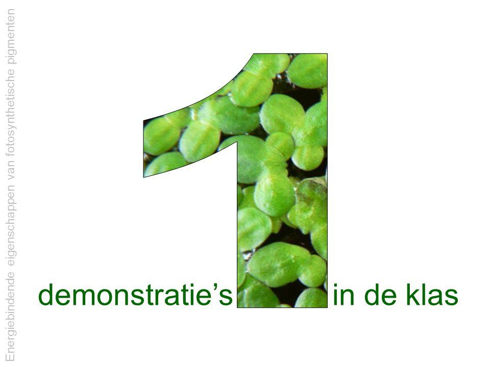 Energiebindende eigenschappen van fotosynthetische pigmenten demonstratie's in de klas
