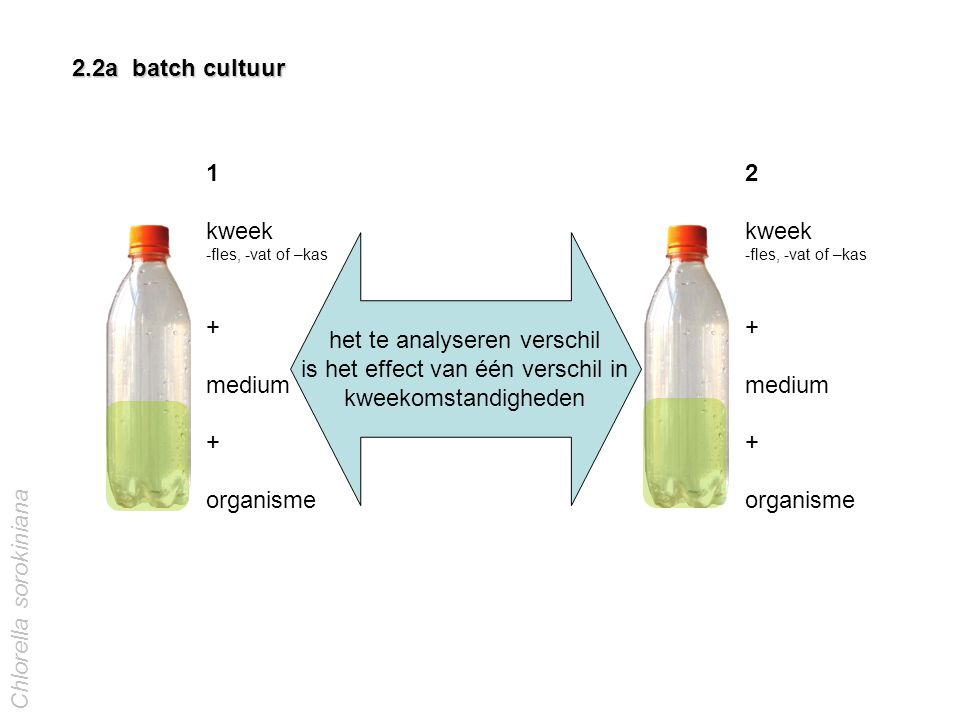 het te analyseren verschil is het effect van één verschil in kweekomstandigheden 1 kweek -fles, -vat of –kas + medium + organisme 2.2a batch cultuur 2 kweek -fles, -vat of –kas + medium + organisme Chlorella sorokiniana