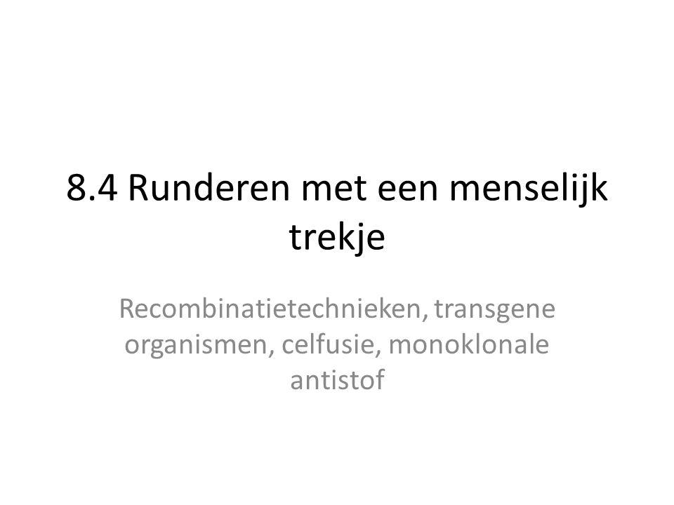 8.4 Runderen met een menselijk trekje Recombinatietechnieken, transgene organismen, celfusie, monoklonale antistof