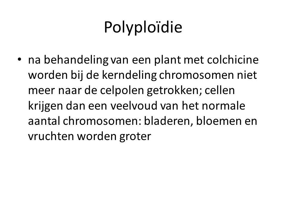 Polyploïdie na behandeling van een plant met colchicine worden bij de kerndeling chromosomen niet meer naar de celpolen getrokken; cellen krijgen dan