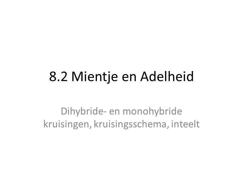 8.2 Mientje en Adelheid Dihybride- en monohybride kruisingen, kruisingsschema, inteelt