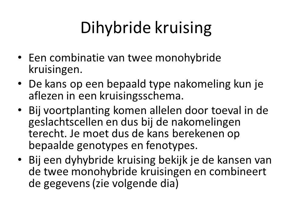 Dihybride kruising Een combinatie van twee monohybride kruisingen. De kans op een bepaald type nakomeling kun je aflezen in een kruisingsschema. Bij v