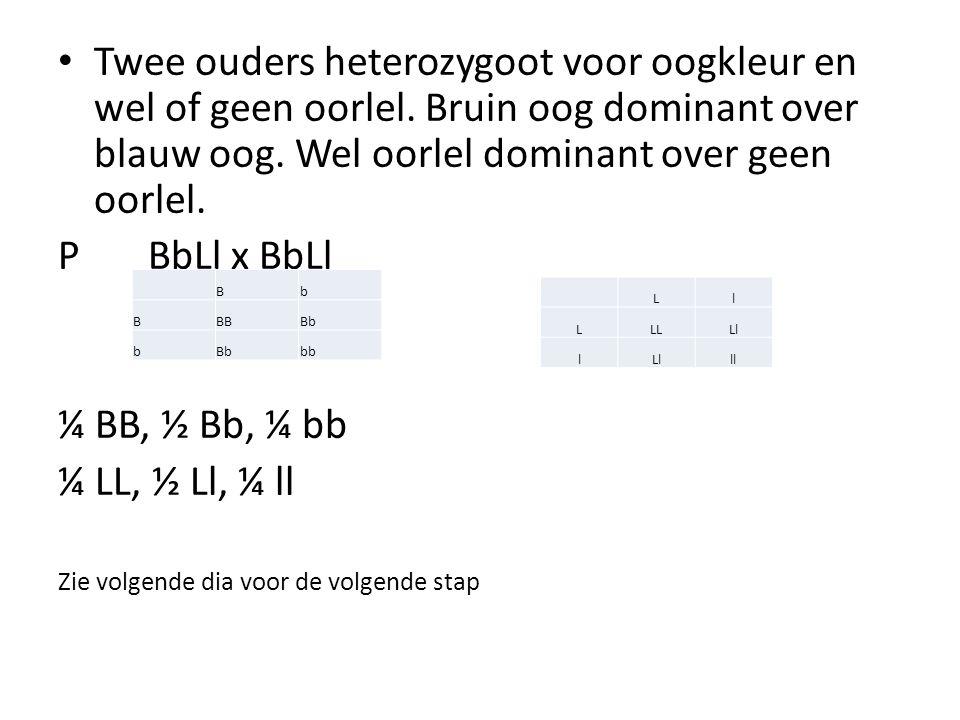 In een kruisingsschema de verhouding van het genotype bij de F1: Verhouding Fenotype: 9/16 Bruin met oorlel 3/16 Bruin zonder oorlel 3/16 blauw met oorlel 1/16 blauw zonder oorlel 1/4 BB2/4 Bb1/4 bb 1/4 LL1/16 BBLL2/16 BbLL1/16 bbLL 2/4 Ll2/16 BBLl4/16 BbLl2/16 bbLl 1/4 ll1/16 BBll2/16 Bbll1/16 bbll