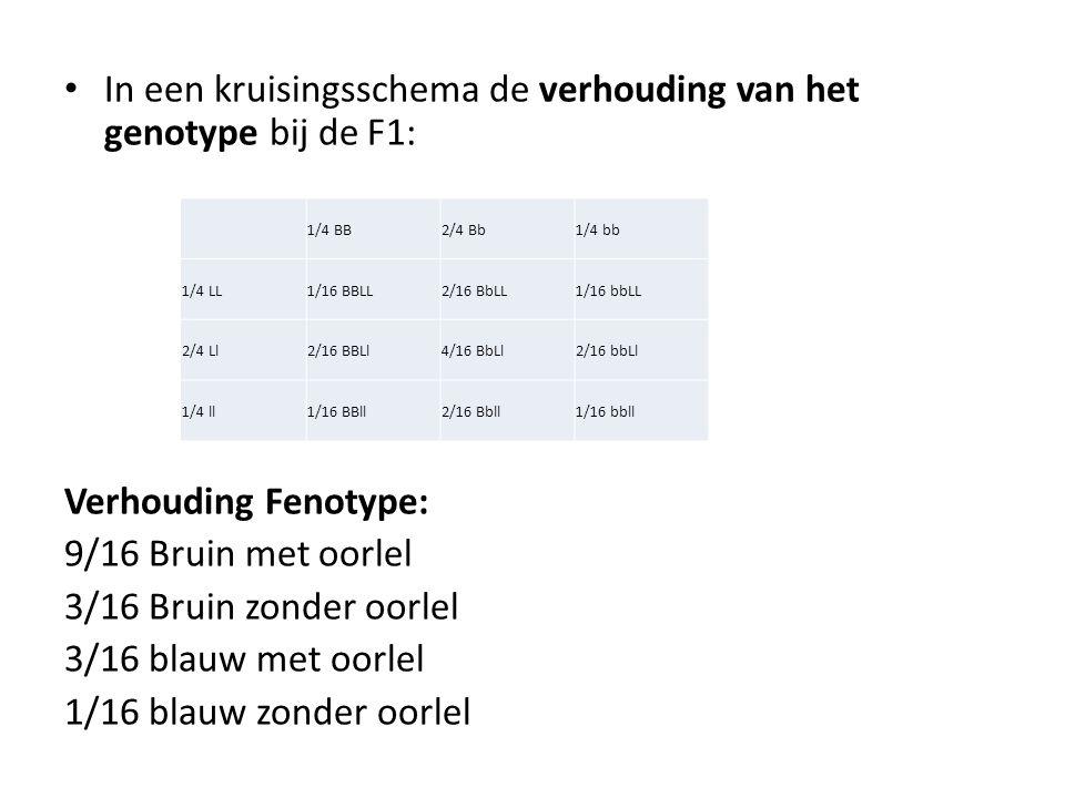 In een kruisingsschema de verhouding van het genotype bij de F1: Verhouding Fenotype: 9/16 Bruin met oorlel 3/16 Bruin zonder oorlel 3/16 blauw met oo