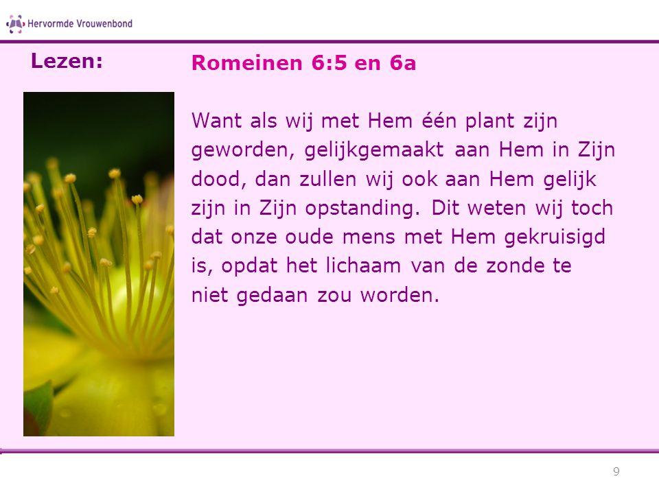 Romeinen 6:5 en 6a Want als wij met Hem één plant zijn geworden, gelijkgemaakt aan Hem in Zijn dood, dan zullen wij ook aan Hem gelijk zijn in Zijn opstanding.