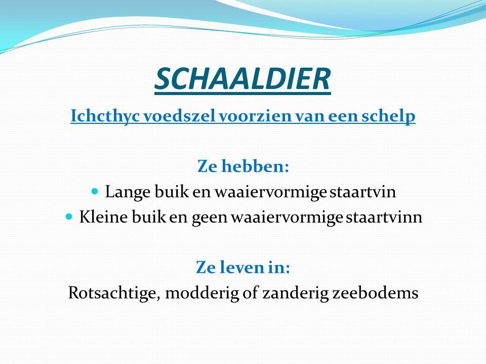 SCHAALDIER Ichcthyc voedszel voorzien van een schelp Ze hebben: Lange buik en waaiervormige staartvin Kleine buik en geen waaiervormige staartvinn Ze
