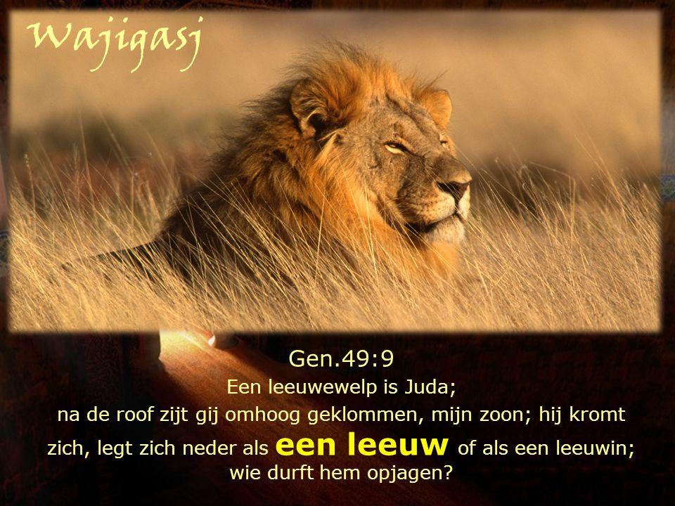 Gen.49:9 Een leeuwewelp is Juda; na de roof zijt gij omhoog geklommen, mijn zoon; hij kromt zich, legt zich neder als een leeuw of als een leeuwin; wi