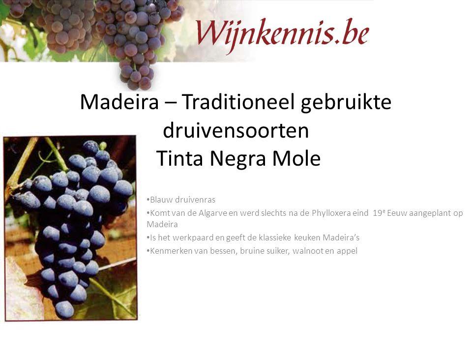 Madeira – Traditioneel gebruikte druivensoorten Tinta Negra Mole Blauw druivenras Komt van de Algarve en werd slechts na de Phylloxera eind 19 e Eeuw