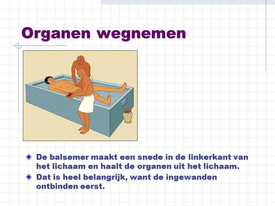 Organen wegnemen De balsemer maakt een snede in de linkerkant van het lichaam en haalt de organen uit het lichaam. Dat is heel belangrijk, want de ing