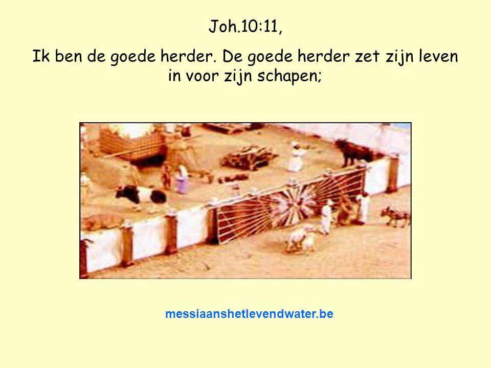 Hebr.13:11-13 Want van de dieren, waarvan het bloed als zondoffer door de hogepriester in het heiligdom werd gebracht, werd het lichaam buiten de lege