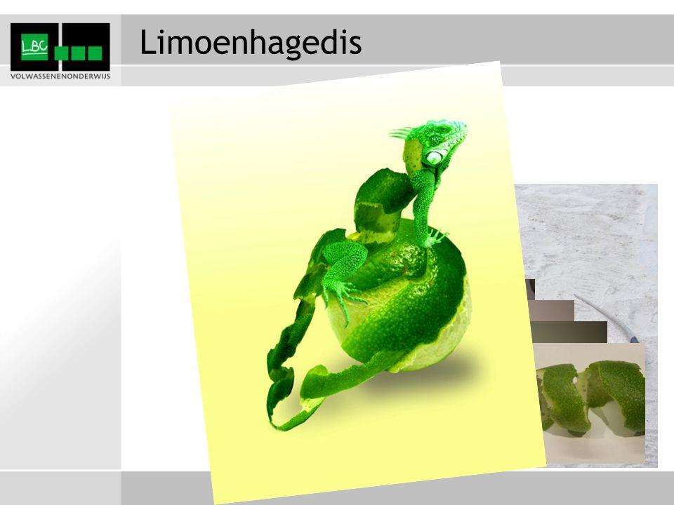 Limoenhagedis