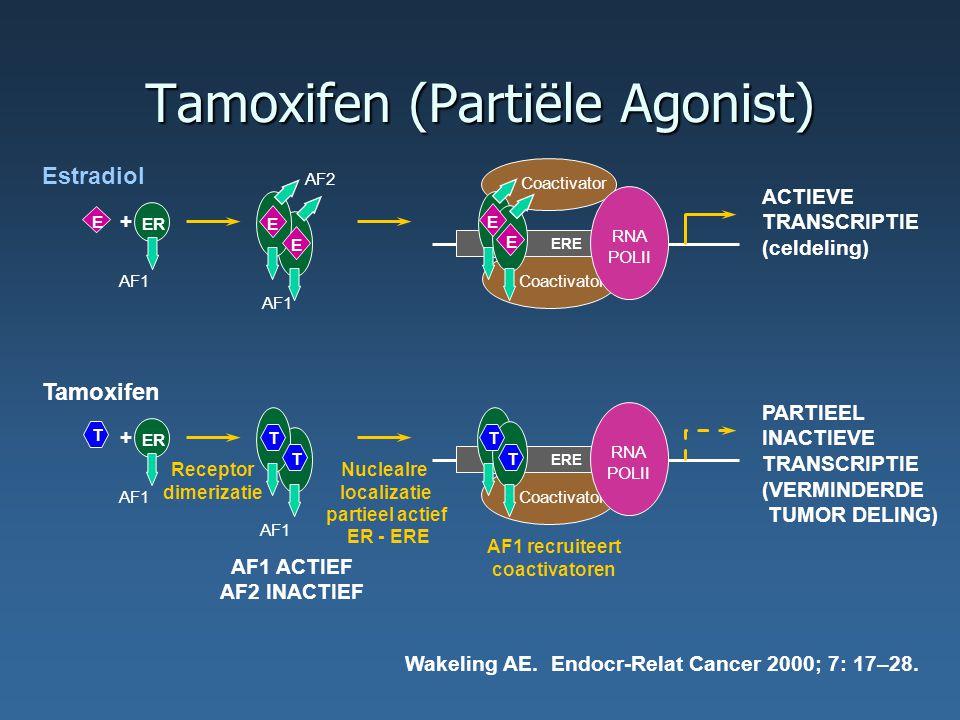 Tamoxifen (Partiële Agonist) Tamoxifen Coactivator AF1 ER + Receptor dimerizatie NucleaIre localizatie partieel actief ER - ERE ERE RNA POLII PARTIEEL INACTIEVE TRANSCRIPTIE (VERMINDERDE TUMOR DELING) AF1 recruiteert coactivatoren T T T T T AF1 ACTIEF AF2 INACTIEF AF1 Wakeling AE.