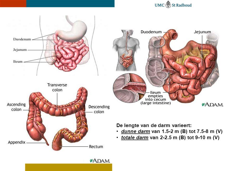 De lengte van de darm varieert: dunne darm van 1.5-2 m (B) tot 7.5-8 m (V) totale darm van 2-2.5 m (B) tot 9-10 m (V)