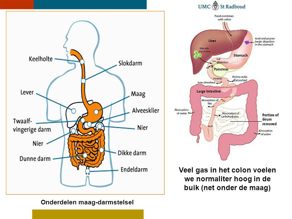 Veel gas in het colon voelen we normaliter hoog in de buik (net onder de maag) Onderdelen maag-darmstelsel
