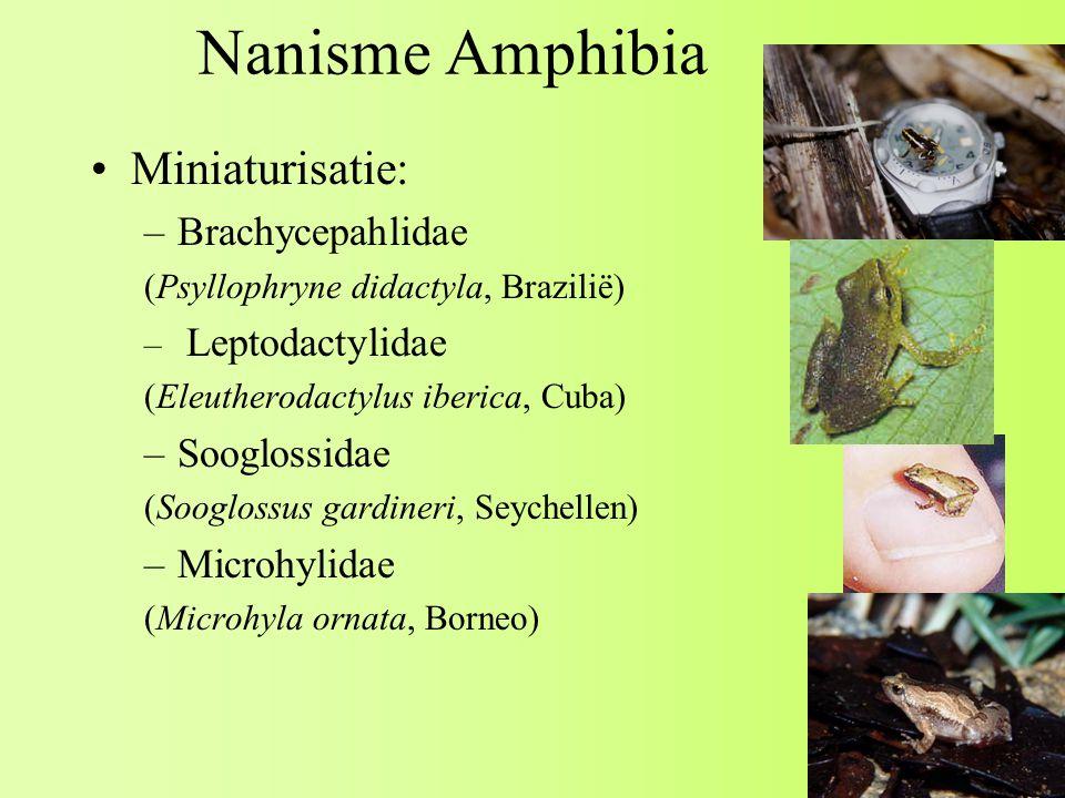 Nanisme Amphibia Miniaturisatie: –Brachycepahlidae (Psyllophryne didactyla, Brazilië) – Leptodactylidae (Eleutherodactylus iberica, Cuba) –Sooglossidae (Sooglossus gardineri, Seychellen) –Microhylidae (Microhyla ornata, Borneo)