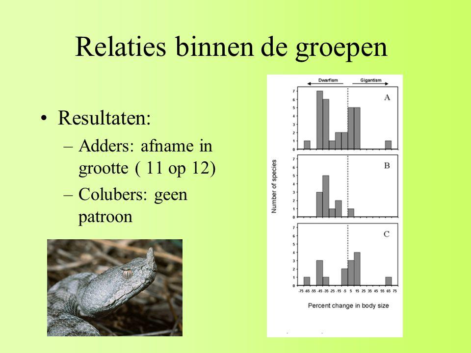 Relaties binnen de groepen Resultaten: –Adders: afname in grootte ( 11 op 12) –Colubers: geen patroon