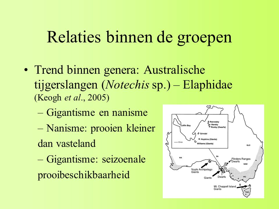 Relaties binnen de groepen Trend binnen genera: Australische tijgerslangen (Notechis sp.) – Elaphidae (Keogh et al., 2005) –Gigantisme en nanisme –Nanisme: prooien kleiner dan vasteland –Gigantisme: seizoenale prooibeschikbaarheid